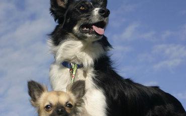 Los perros distinguen las palabras y la entonación de las personas