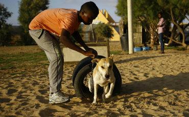 Los perros callejeros de Gaza ya tienen un refugio