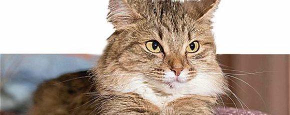 ¿Sabe qué tan importantes son los bigotes de los gatos?