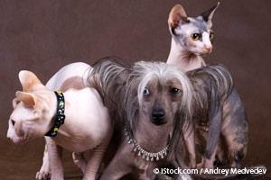 Las Razas Más Populares Para Tener un Hogar Sin Pelos de Mascota